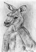 Grey Kangaroo Card